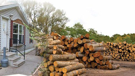 Trumbull County Hardwood Ltd