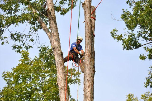 Tree maintenance in Cornelia, GA