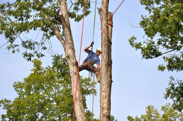 Trimming and tree maintenance in Cornelia, GA