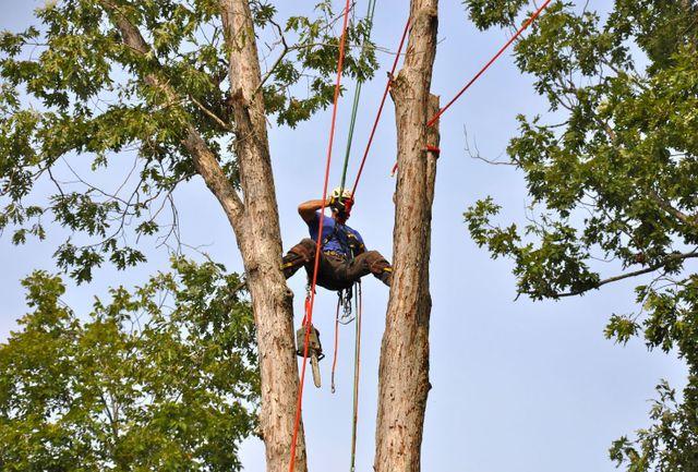 stump removal and tree maintenance in Cornelia, GA