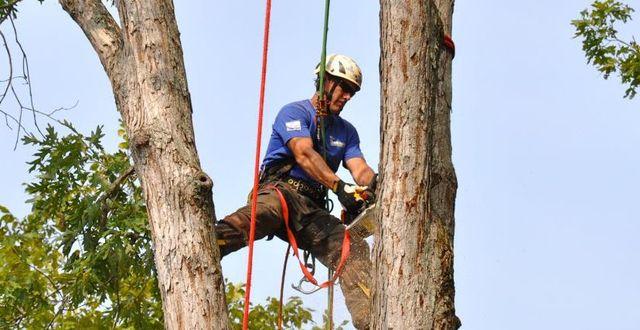 tree removal in progress in Cornelia, GA
