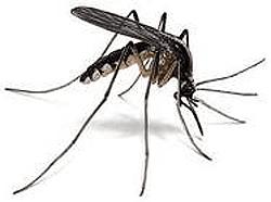 Residential Pest Control Buffalo, NY