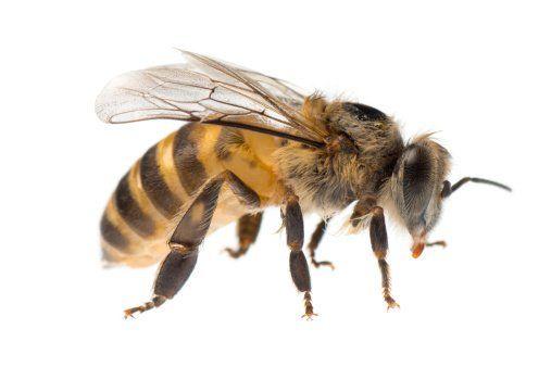 Bee Control Buffalo, NY