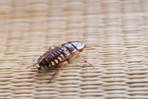 Cockroach Control Buffalo, NY
