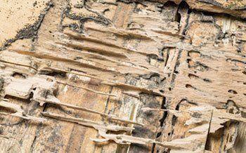 Termite Control Buffalo, NY