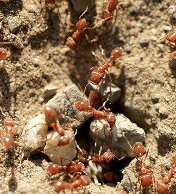 Ant Control in Buffalo, NY