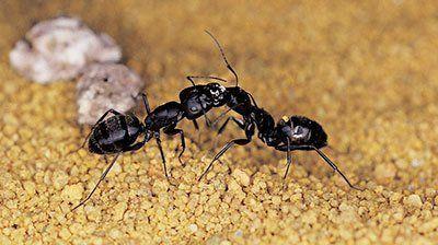 Ant Control Buffalo, NY