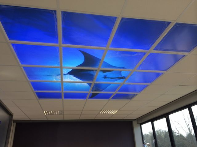 LED suspended ceiling light manta ray