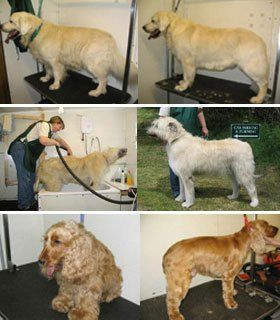 Dog grooming experts