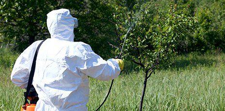 un signore con una  tuta protettiva bianca mentre spruzza dell'acqua su un albero