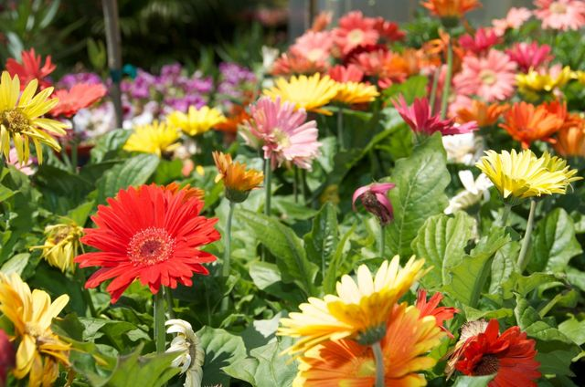 Plants For Zone 7 Full Sun: Learn About Gardening In ...