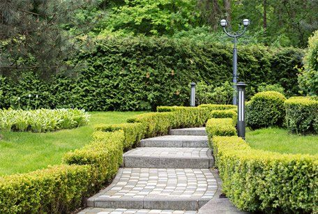 beautiful pathway and hedges