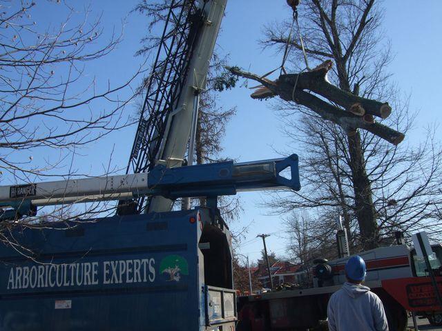 Lexington Tree Service