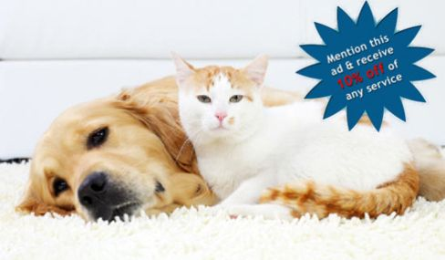 10 Off On Pet Odor Removal And Stain Services For Home In Cincinnati