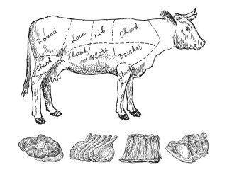 un disegno di una mucca con le parti del corpo rinominate