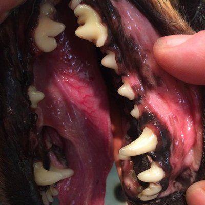 pre dental treatment