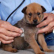 dog micro chipping