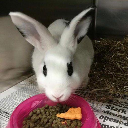rabbit eating food