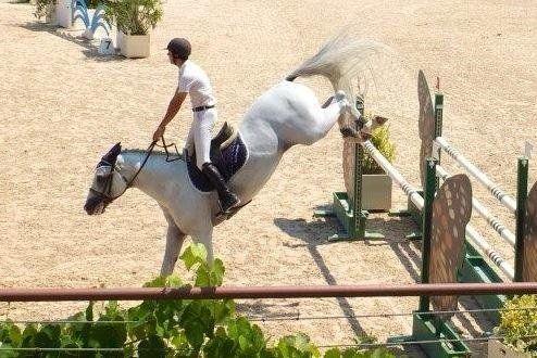 un cavallo con un fantino che hanno appena saltato un ostacolo