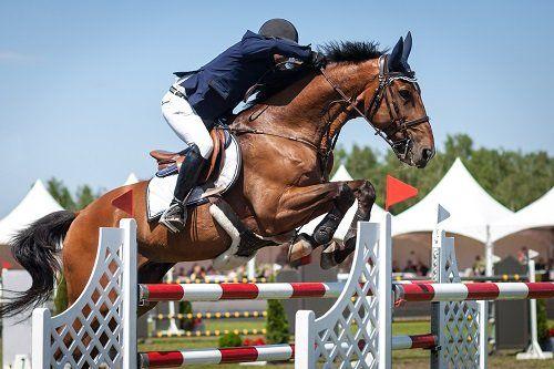 un fantino che salta un ostacolo con un cavallo marrone