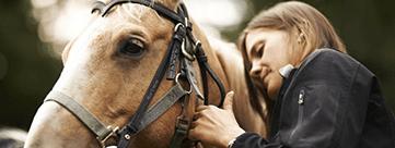 Settimane a cavallo full immersion