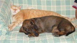 cane e gatto dormono sul divano
