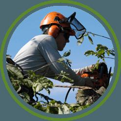 Tree surgeons