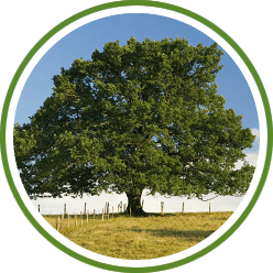 commercial and domestic tree surgery