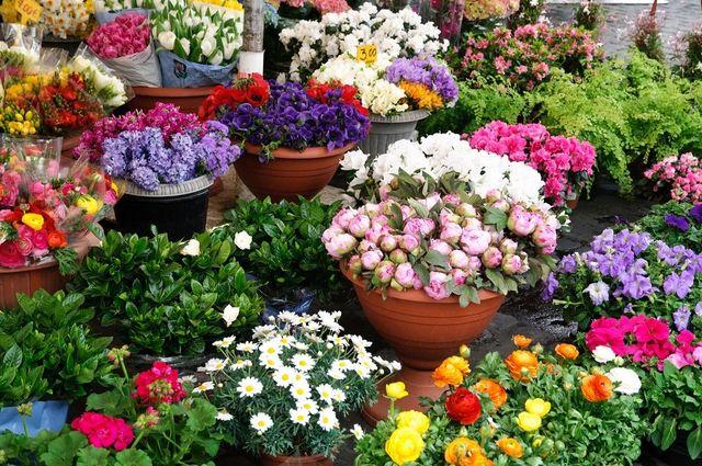 Decorazioni floreali partinico pa la fonte dei fiori for Piante e fiori