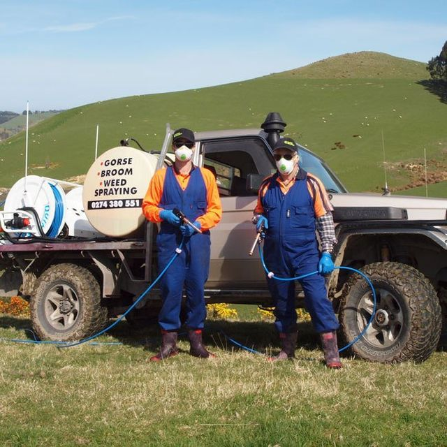Noxious weed removal in Dunedin