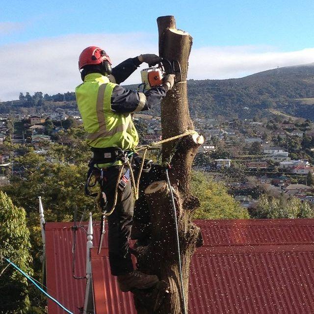 Arboriculture work in Dunedin