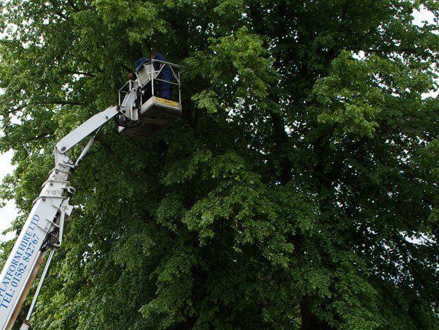 tree felling equipment