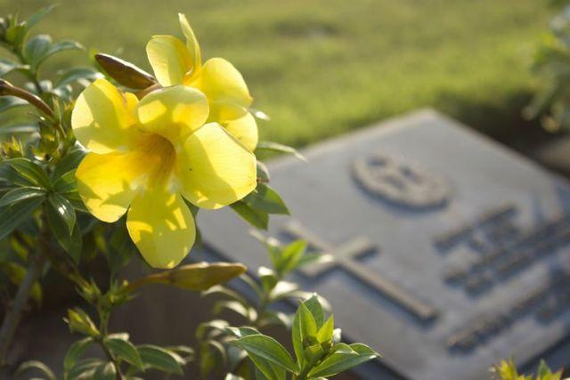 un fiore giallo e una lapide in marmo