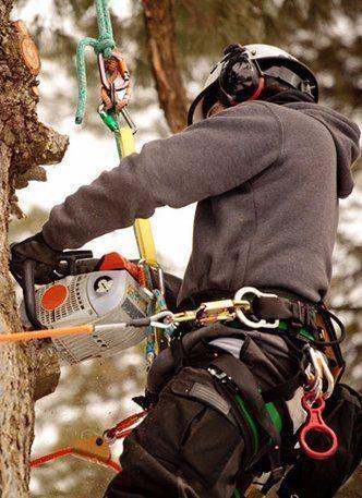 MPDT expert arborist working on a tree