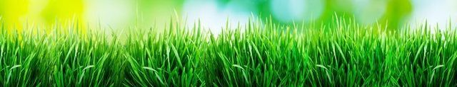 Healthy blades of grass in the lawn