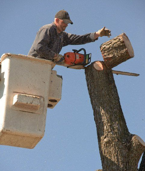 MPDT expert tree worker on a cherry picker with chainsaw