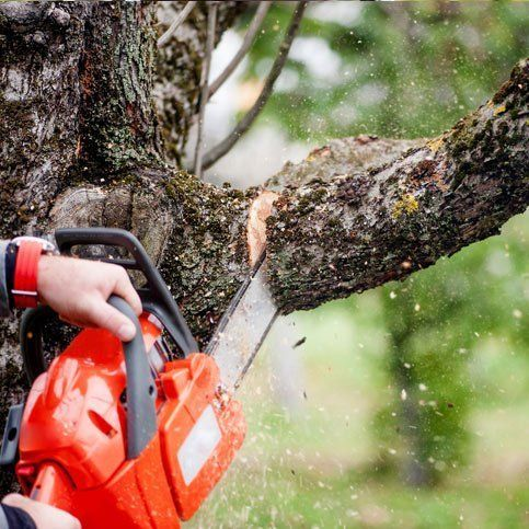 Arborist cutting branch off a tree with chainsaw