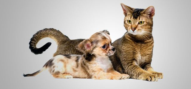 Cat and puppy