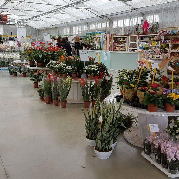 interno di un vivaio con dei vasi di piante fiorite