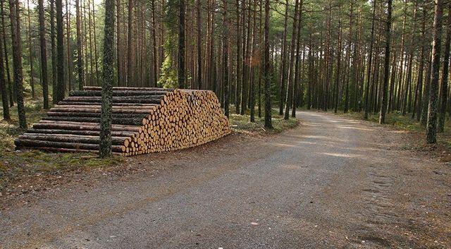 Lumber Company | Penn Select Timber Inc  | Butler, Pennsylvania