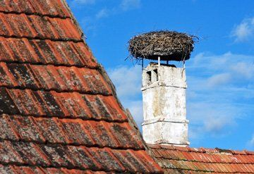 Bird Nest Removal From Chimneys Able Chimney Sweep