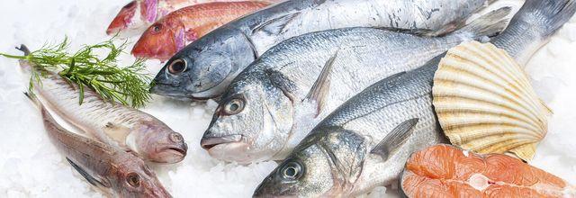 Wholesale and retail frozen fish - La Spezia - Golfomar
