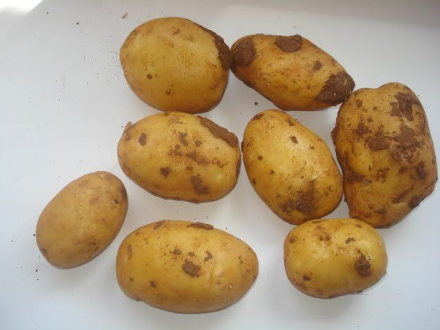patata cicero