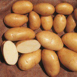 patata primura