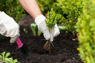 Planting in progress