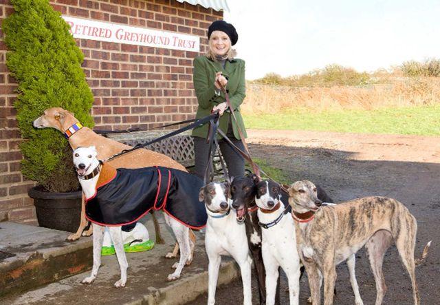 Twiggy with greyhounds