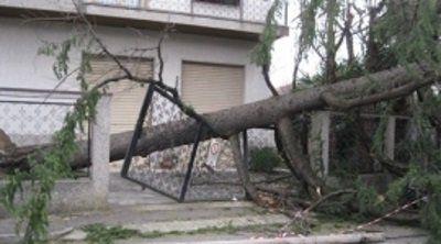 cancello distrutto dalla caduta di un albero