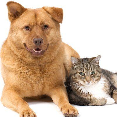 Animal Hospital, Turnpike Veterinary Clinic