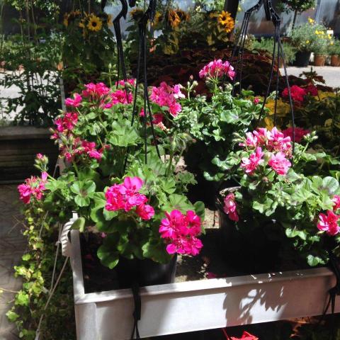 fiori pronti alla vendita
