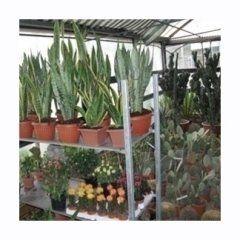 Piante succulente (grasse)